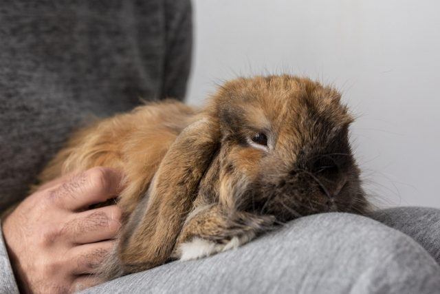 Person Holding a Pet Rabbit