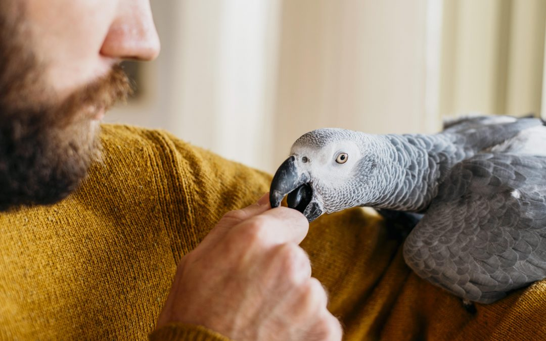 First Aid Tips for Pet Birds