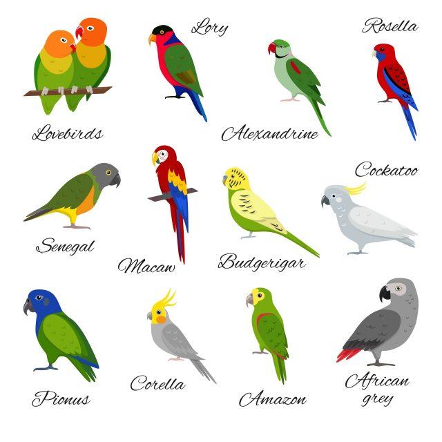 A variety of popular pet birds