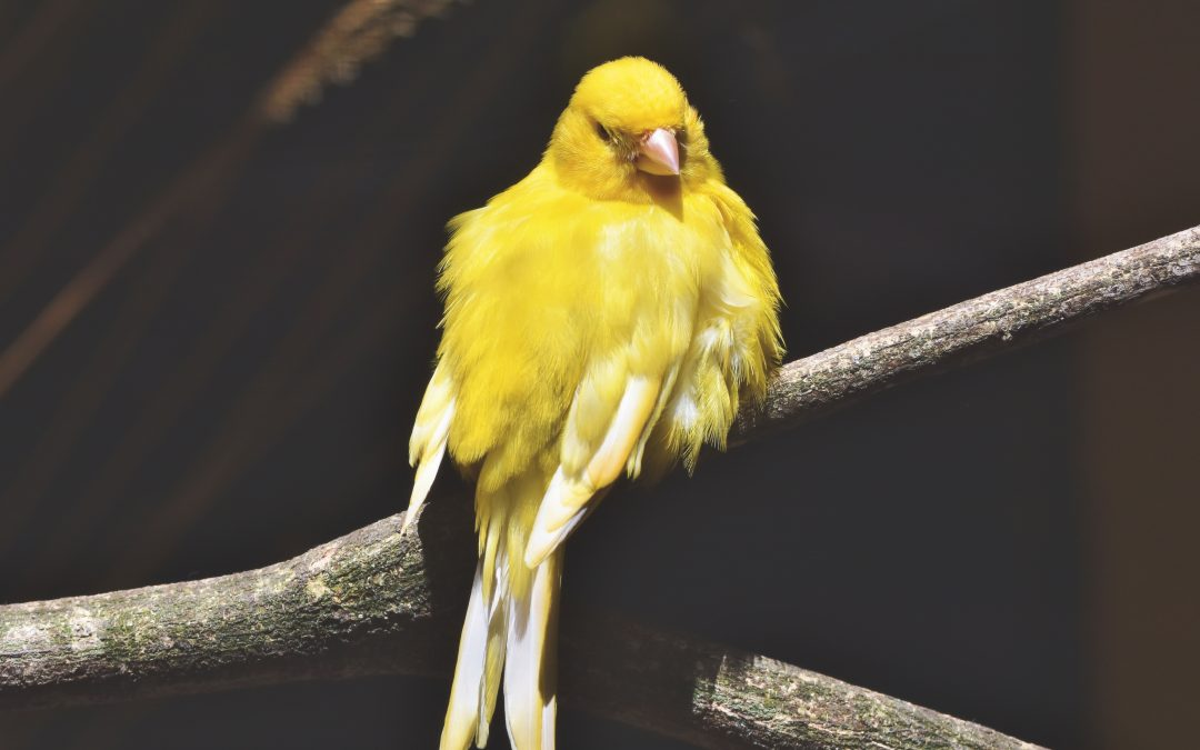 Bird Nutrition 101: How to Raise Healthy and Happy Bird