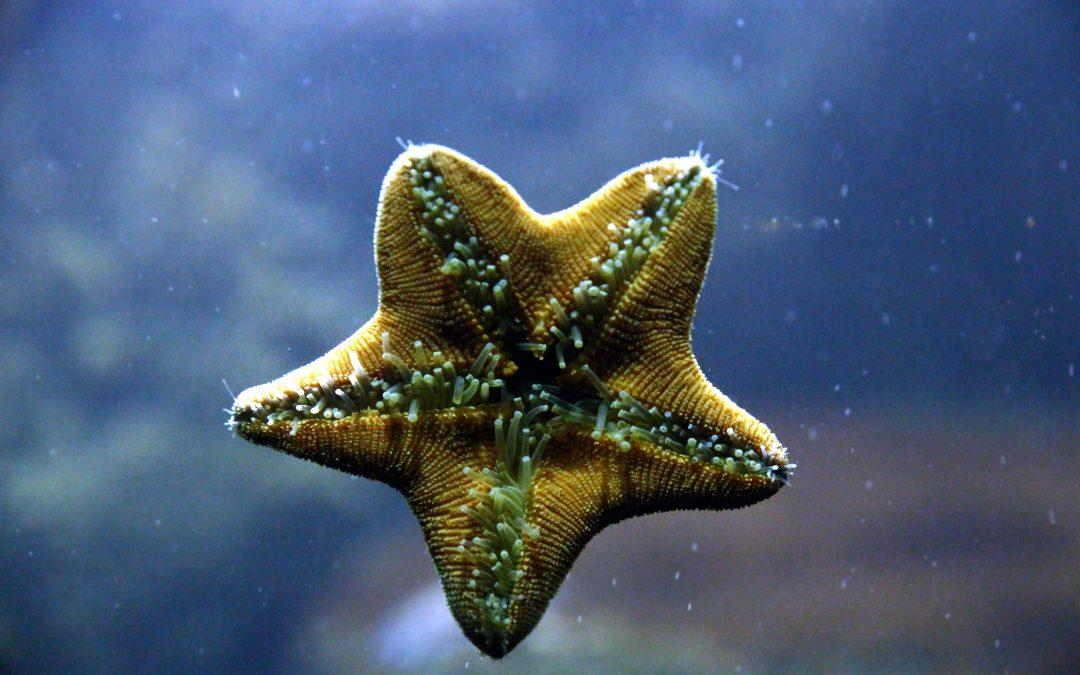 starfish, inside, legs, aquarium