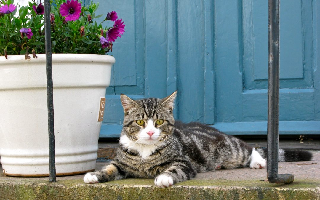 How To Keep Your Cat From Eating Your Houseplants