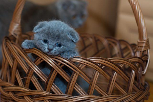 Cute kitten in a basket