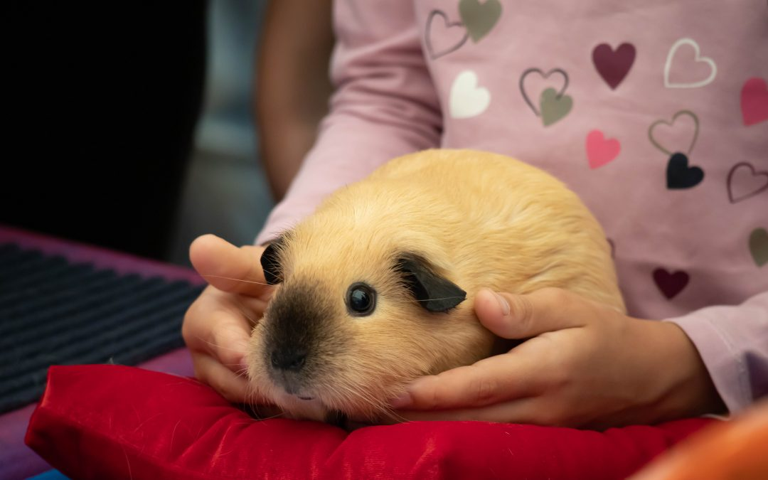 The Big Guide to Pet Rodent Cages – Pet Rats, Gerbils, Guinea Pigs and Sugar Gliders