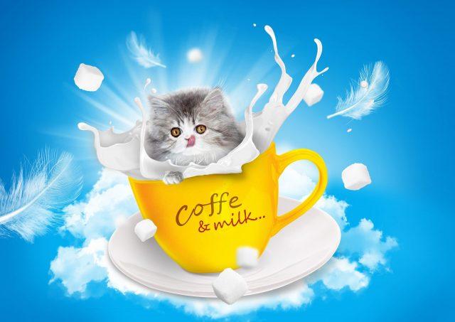 Kitten Drinking Milk