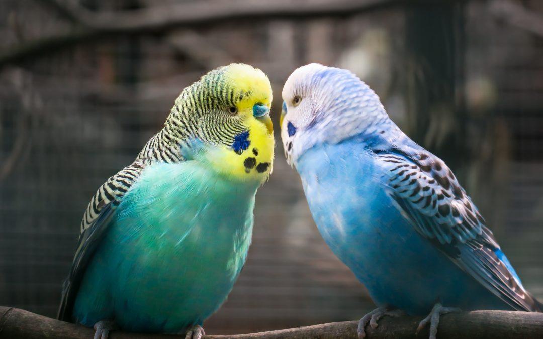Adopting A Pet Bird: Q's and A's