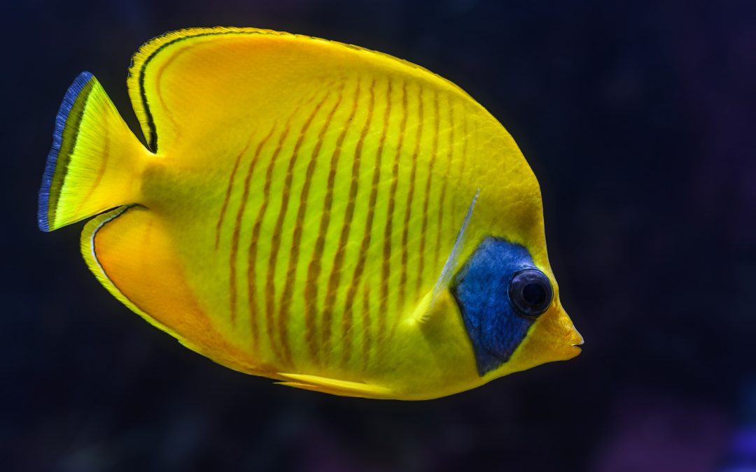 What are the Different Types of Aquarium Filters?