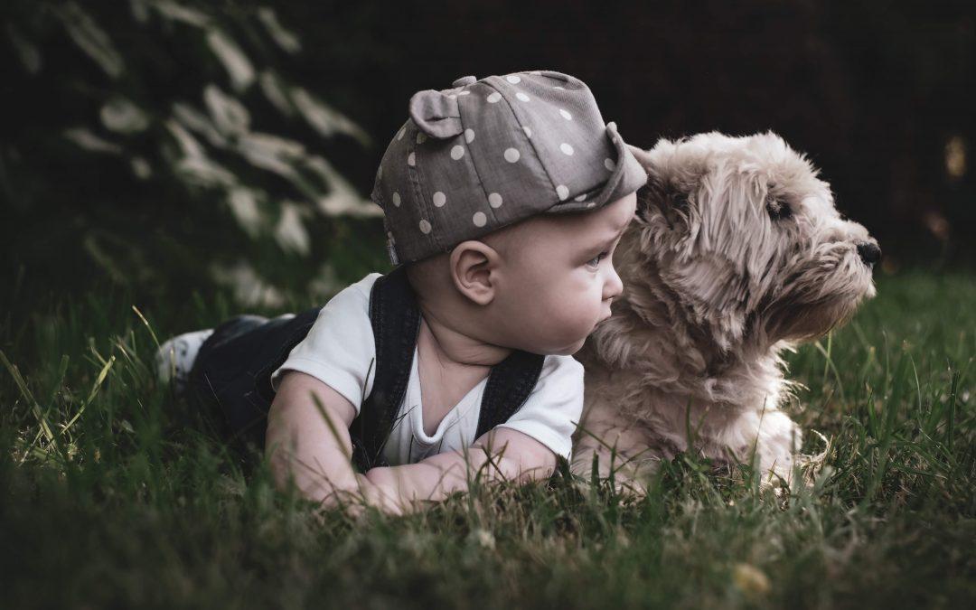 boy, baby, dog