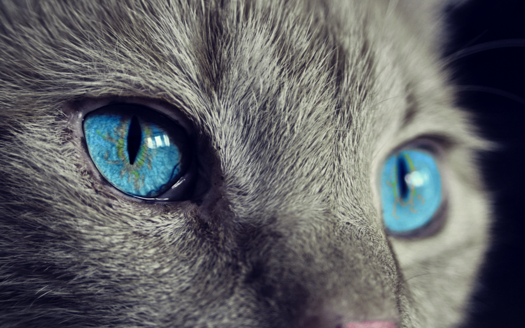 The Essential Guide to Cat Litter and Litter Boxes – How to Keep Your Kitty Clean and Happy