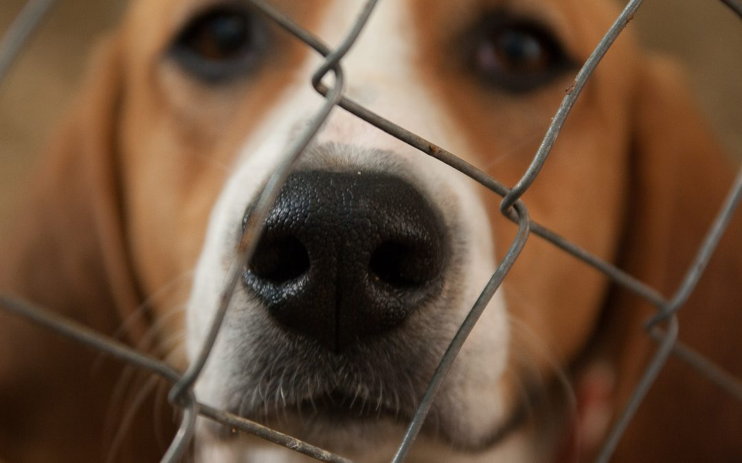 Tips and Check List for Adopting A Dog From The Animal Shelter