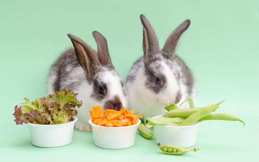 Essentials Of The Bunny Diet