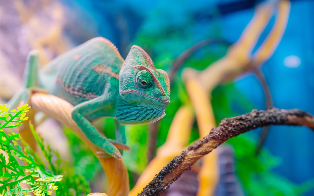 10 Popular Reptile Pets – What You Need to Know Before Getting One