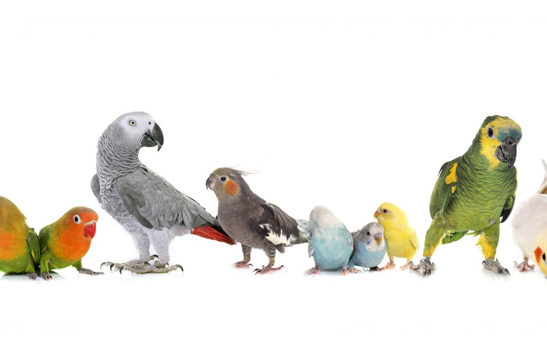 Pet Birds and Parrots – Choosing The Right Cage for Your Feathered Friends