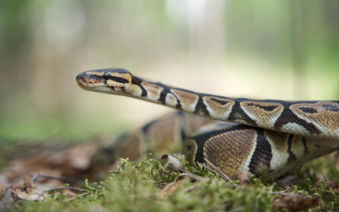 The Reality of the Anaconda