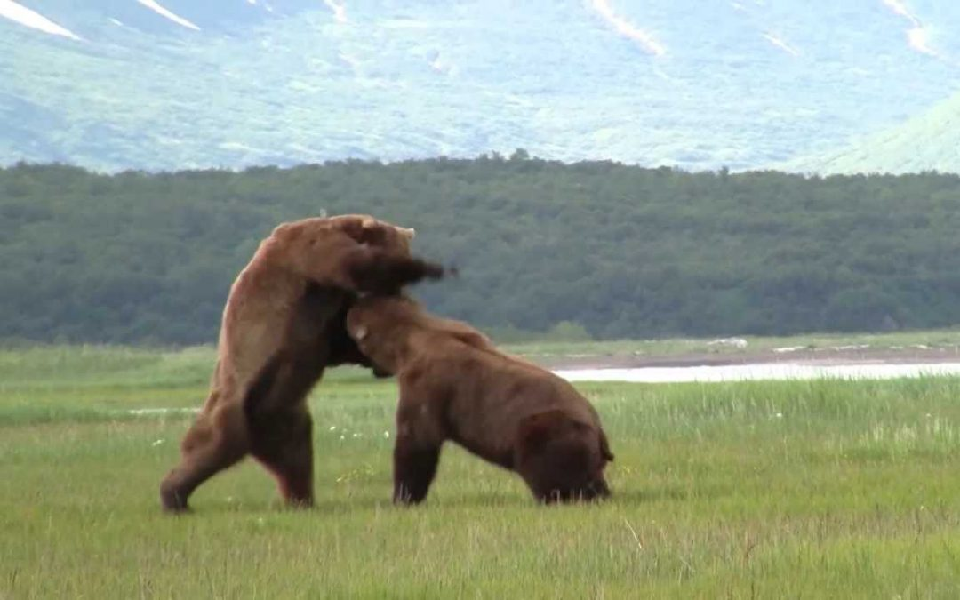 Ultimate Bear Spotting Guide: Top Tips to See Bears in the Wild