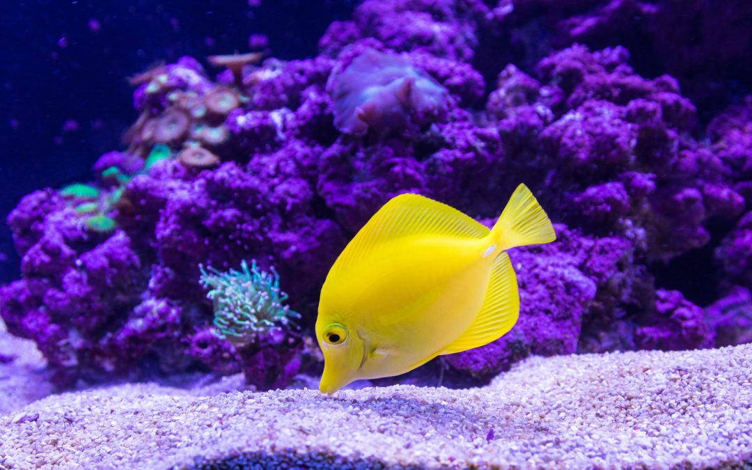 Aquarium heaters, pumps and lights on a budget