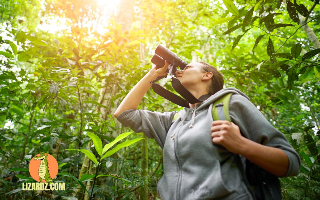 Bird Watching Supplies: What You Need