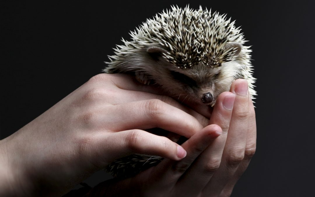 Intro to Some Exotic Pets to Add to Your Family