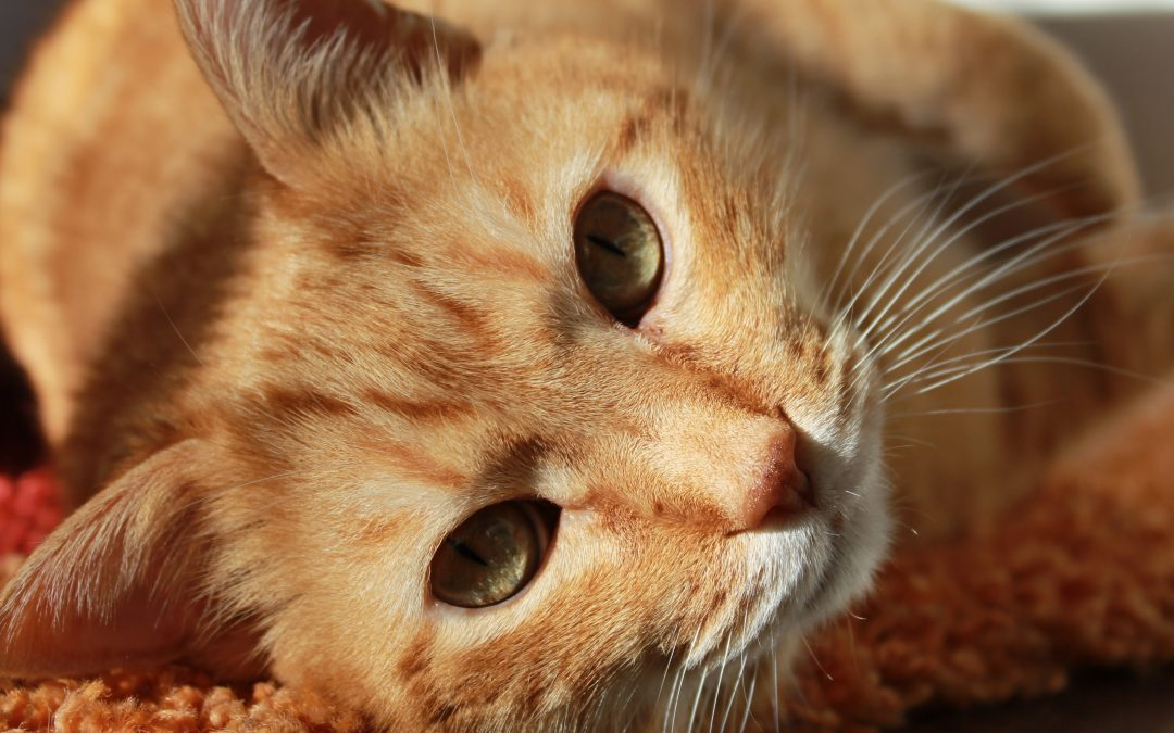 Cat Eating Disorders – Is Your Cat Too Thin?