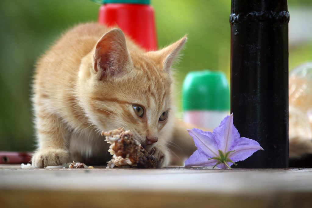 Photo of a cat eating