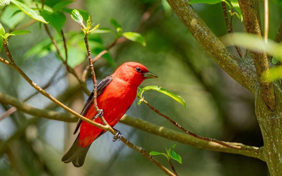 Best Bird Watching Scopes