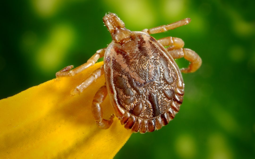 The Ultimate Guide to Preventing and Eliminating Flea and Tick Infestation